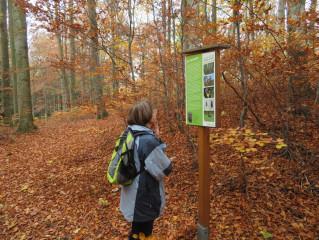 Zachovalý smíšený les u zastavení č. 6 NS