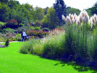 Argentinský Miscanthus (pampagrass) vykvétá na přelomu léta a podzimu. V pozadí letničkový záhon.