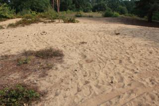 Přírodní pískoviště na Slepičím vršku