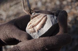 Replika ukázkové zkameněliny na suťovišti nad skryjským mostem