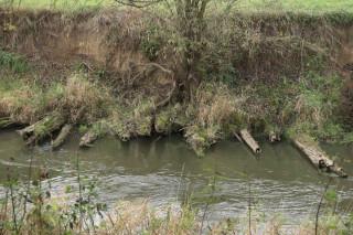 Zbytky hatěné stezky ve břehu Odry