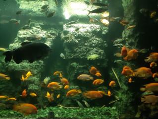 Pohled pod vodní hladinu v tunelu z akrylátového skla, jenž prochází středem obřího akvária