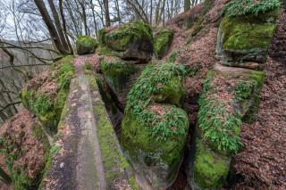 Mnohé skalní bloky jsou porostlé mechy a kapradinami. Společně se spadaným listím tak tvoří nádherně barevnou scenérii.