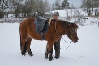 Islandští koně z Mileva