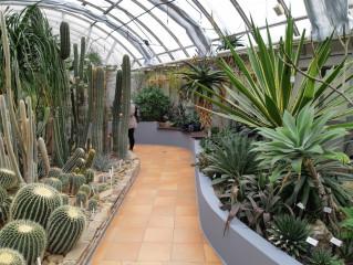 Kaktusový a sukulentní skleník