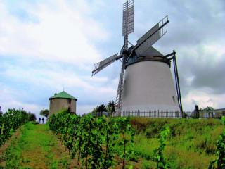 Větrné mlýny v Retzu jsou obklopeny vinicemi.