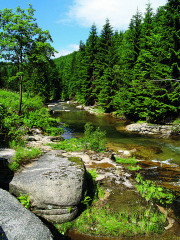 Malebná partie Pilařova údolí pod Harrachovem