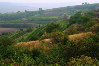 Remízky kolem Lampelberku ukrývají plno ovocných stromů a ořešáků. Z podzimního výletu si tak přinesete domů malou výslužku. Ovšem pozor, réva ve vinohradech je přísně hlídána.