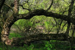 Jaro na Kátovském rameni. Ale k toulkám lužními lesy se rovněž skvěle hodí pestrý podzim. V obou případech je navíc značně eliminována přítomnost komárů.