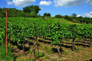K nejstarší české vinici