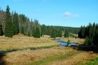 Údolí Roklanského potoka