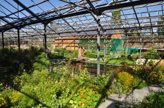 Pohled do skleníku motýlária